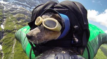 Ο πρώτος σκύλος σε… ελεύθερη πτώση από 4000 μέτρα!