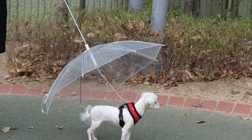 Μια ομπρέλα ειδικά για σκύλους