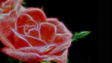Ελληνίδα επιστήμονας δημιούργησε το πρώτο ηλεκτρονικό τριαντάφυλλο