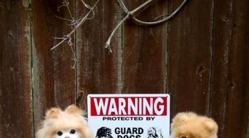 Όταν οι πινακίδες «Προσοχή σκύλος» αποκτούν κωμική διάσταση…