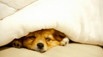 Δέκα ενδιαφέρουσες και παράξενες αλήθειες για τον ύπνο