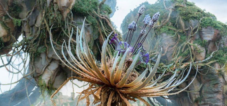 Disney's World of Avatar: What It's Like to Spend a Day on Pandora
