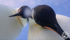 These penguins found a camera, then they hammed it up