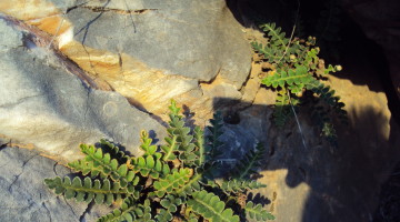 Πέτρες χολής (χολολιθίαση)