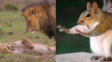 Τριάντα από τις αστείες φωτογραφίες του διαγωνισμού άγριας ζωής 2018