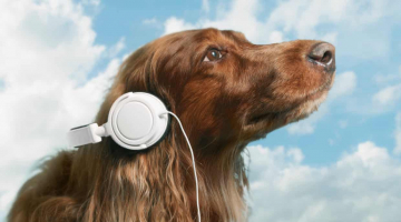 Pet sounds: why your dog loves listening to Bob Marley