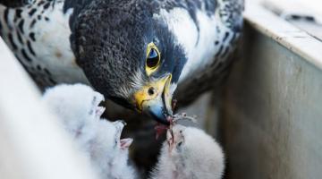 Δείτε τις κορυφαίες φωτογραφίες άγριας ζωής για το 2018 από την Guardian