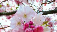 Επτά είναι τα είδη της χαράς με κορυφή την χαρούμενη χαρά και τελευταία την χαρά του φθόνου!