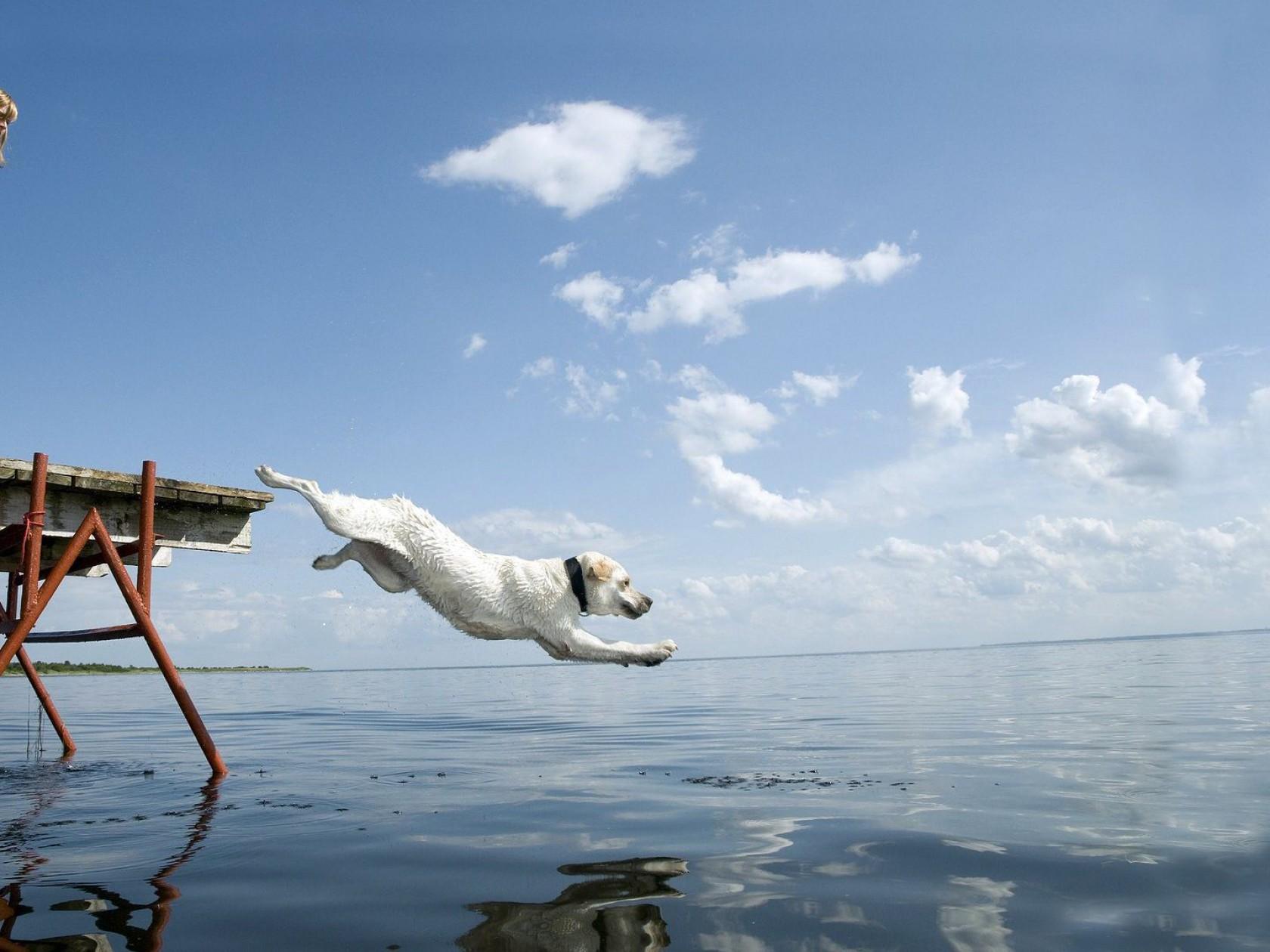 Girl-dog-sea-diving-swimming-1260x1680