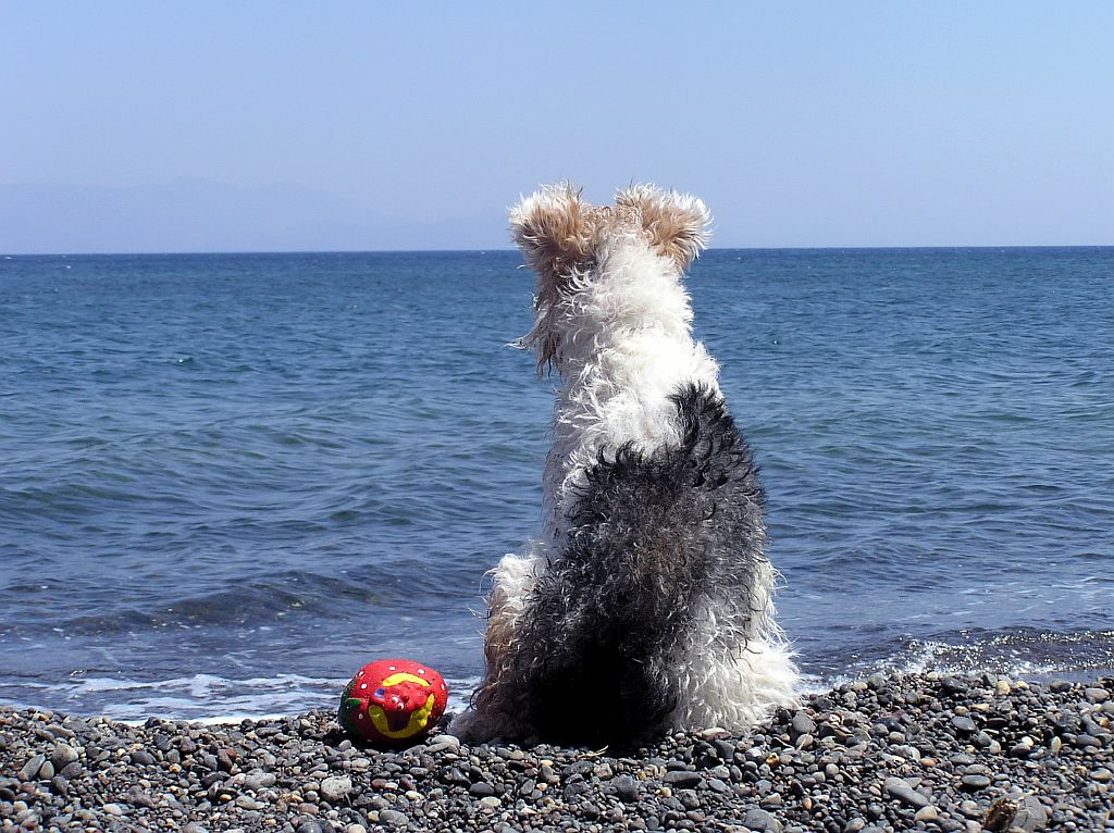 dog_looking_out_to_sea