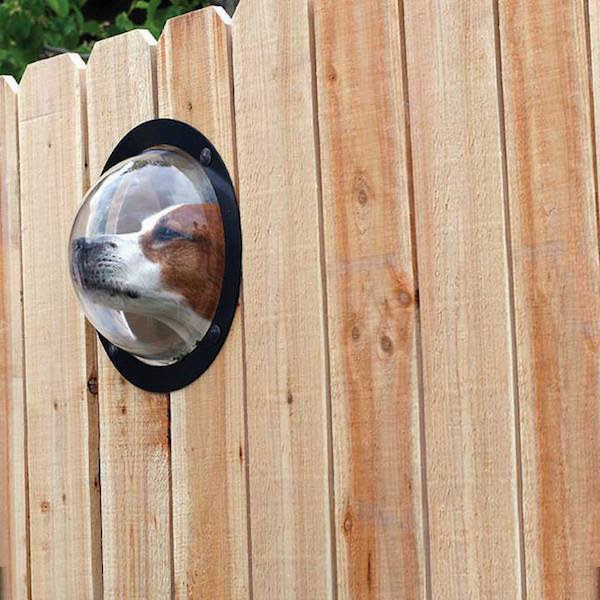 unnecessary-pet-products-window