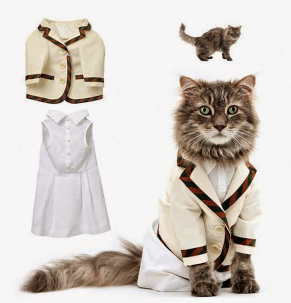 unnecessary-pet-products-cat-costume
