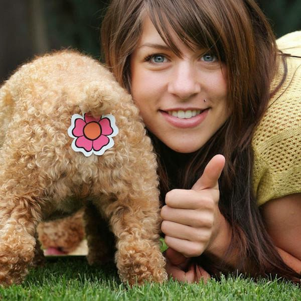 unnecessary-pet-products-dog-sticker