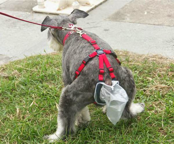 unnecessary-pet-products-dog-bag