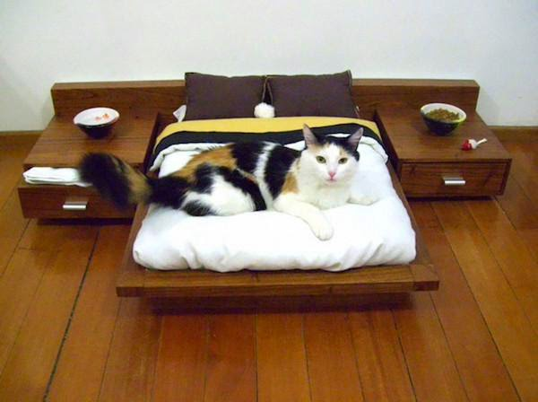 unnecessary-pet-products-cat-bedroom