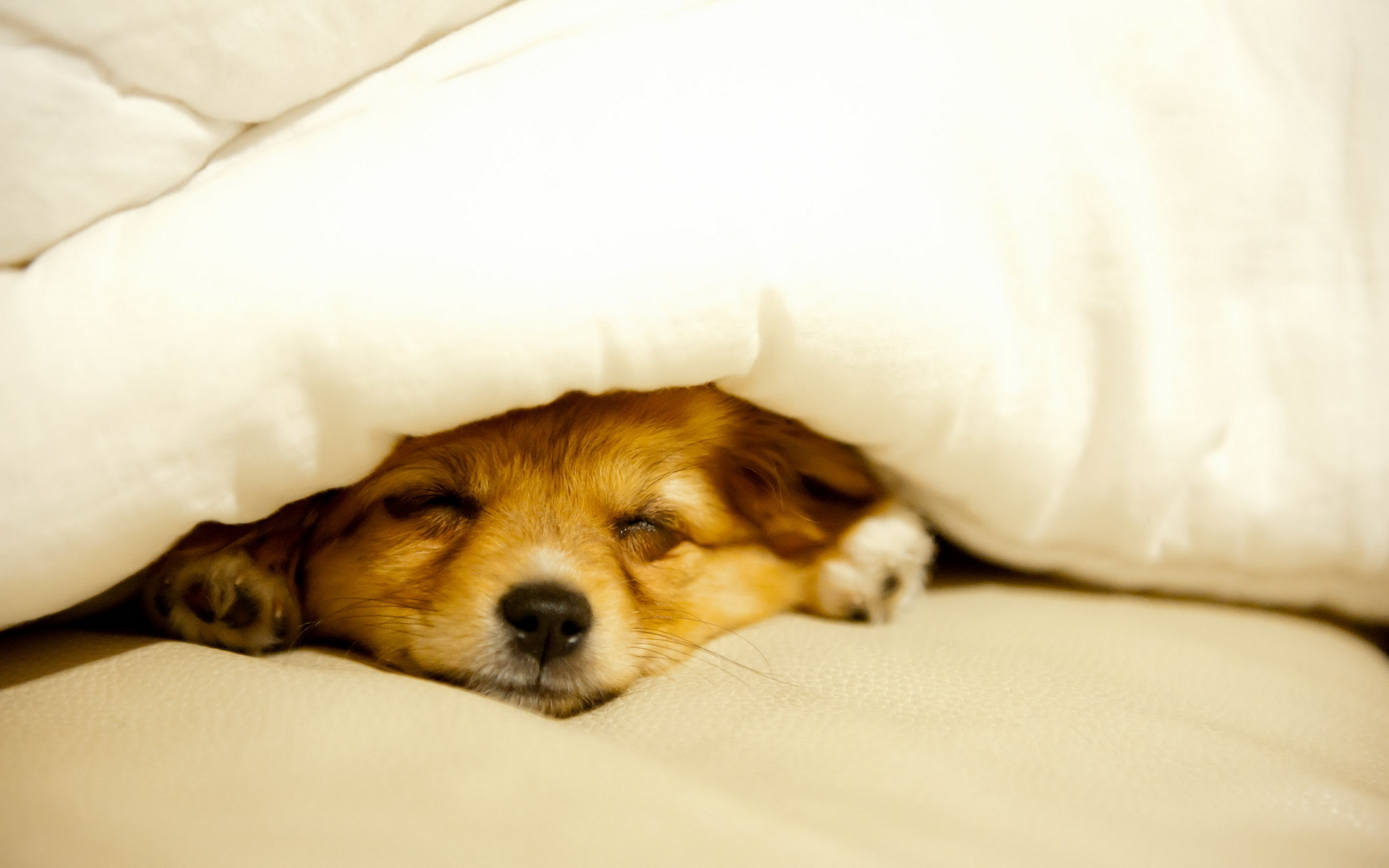 sleeping-dog-wallpaper
