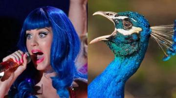 Αν διάσημοι ποπ σταρς ήταν πουλιά