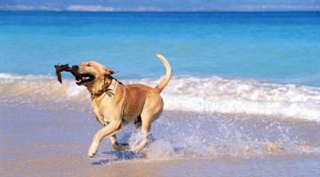Παραλίες στις οποίες επιτρέπεται το κολύμπι στους σκύλους