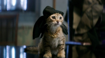 New Movies, TV on iTunes in July: 'Keanu,' 'Angry Birds,' 'Shooter' Free Series Premiere