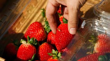 Πως να διαλέξουμε σωστά τα φρούτα που θέλουμε να αγοράσουμε