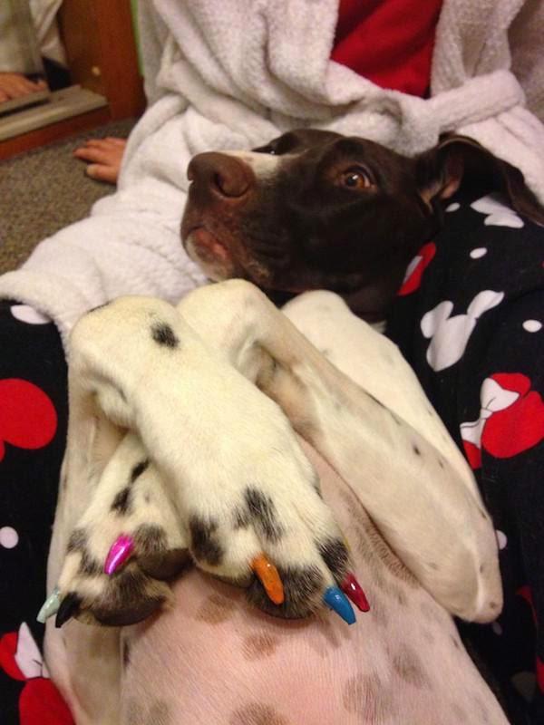 unnecessary-pet-products-dog-nail-polish