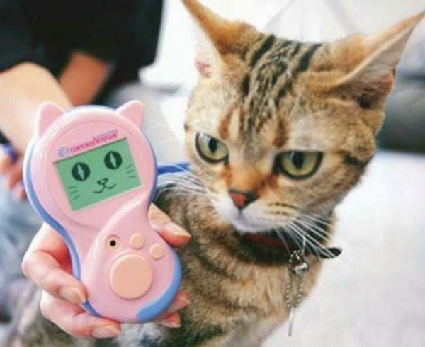 unnecessary-pet-products-cat